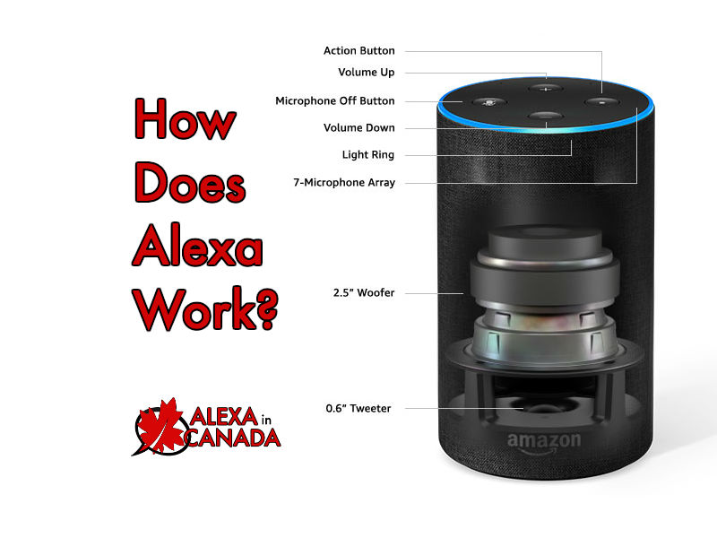 How Does Alexa Work? | Alexa in Canada